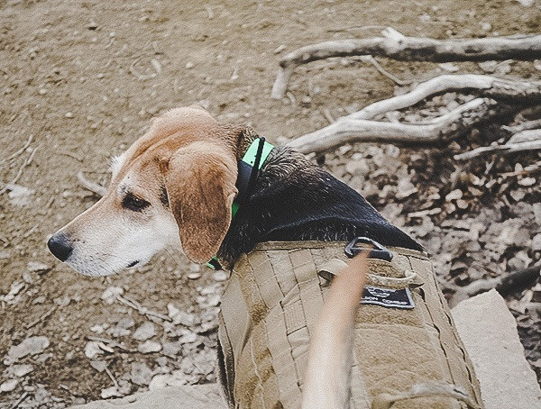 Hundetracking Jagd Sportdog Marke Tek 1 5 Gps Tracking Plus E-Kragen-Review